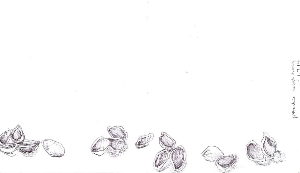 "Pistachio Neighbors  January 2014 Pen on paper 8""x12"""