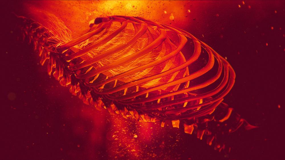Spine_001.jpg