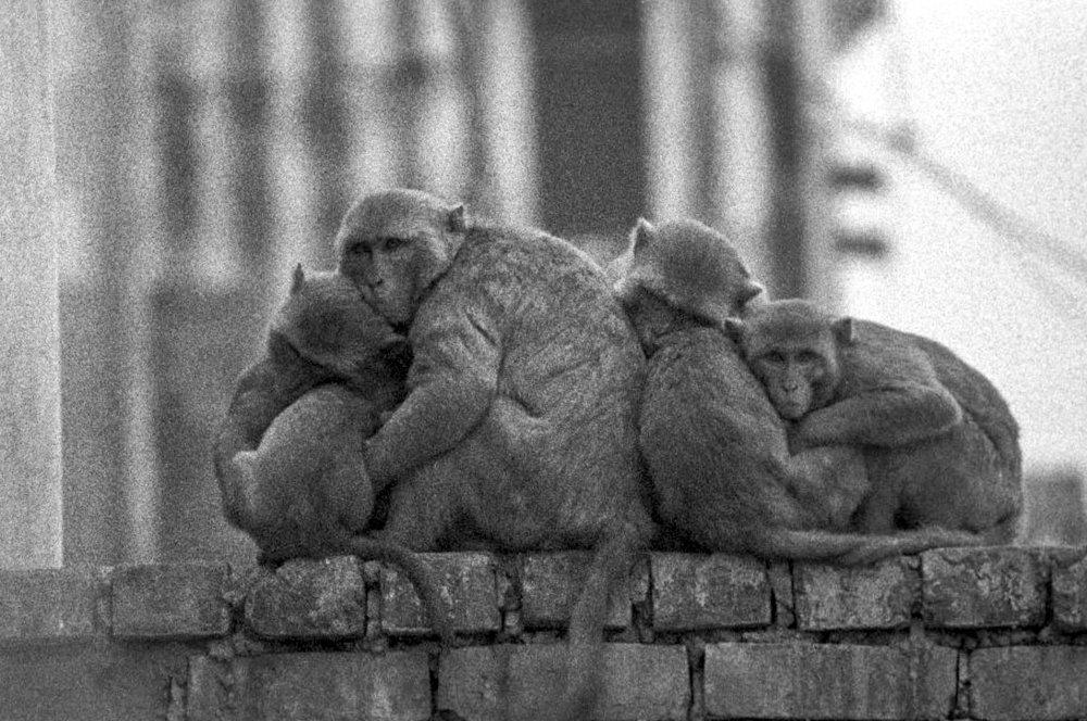 V27  Varanasi-35mm film