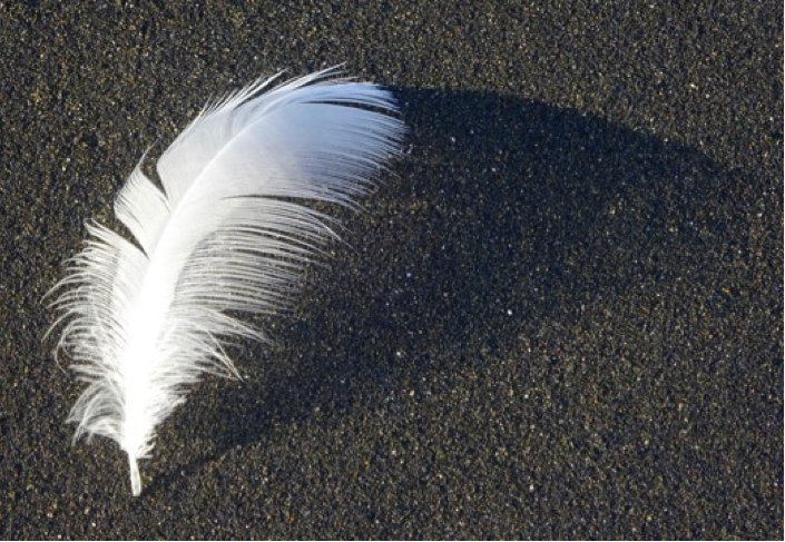 whitefeather.png