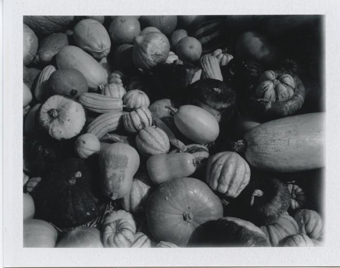 las vegas pumpkin patch polaroid 7