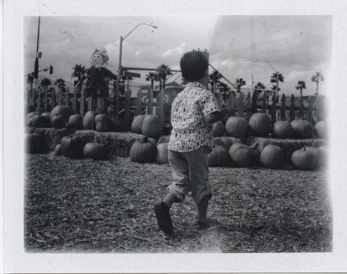 las vegas pumpkin patch polaroid 5