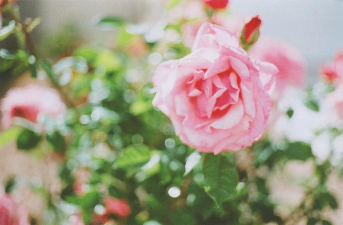 flowers gaby j 1