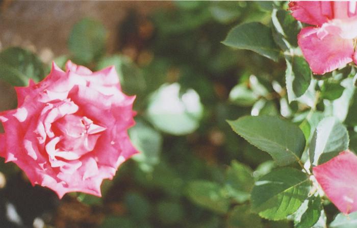 flowers gaby j 3