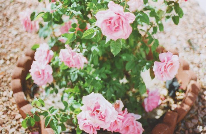 flowers gaby j 5