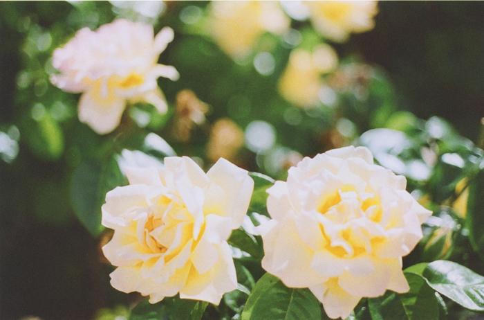 flowers gaby j 6