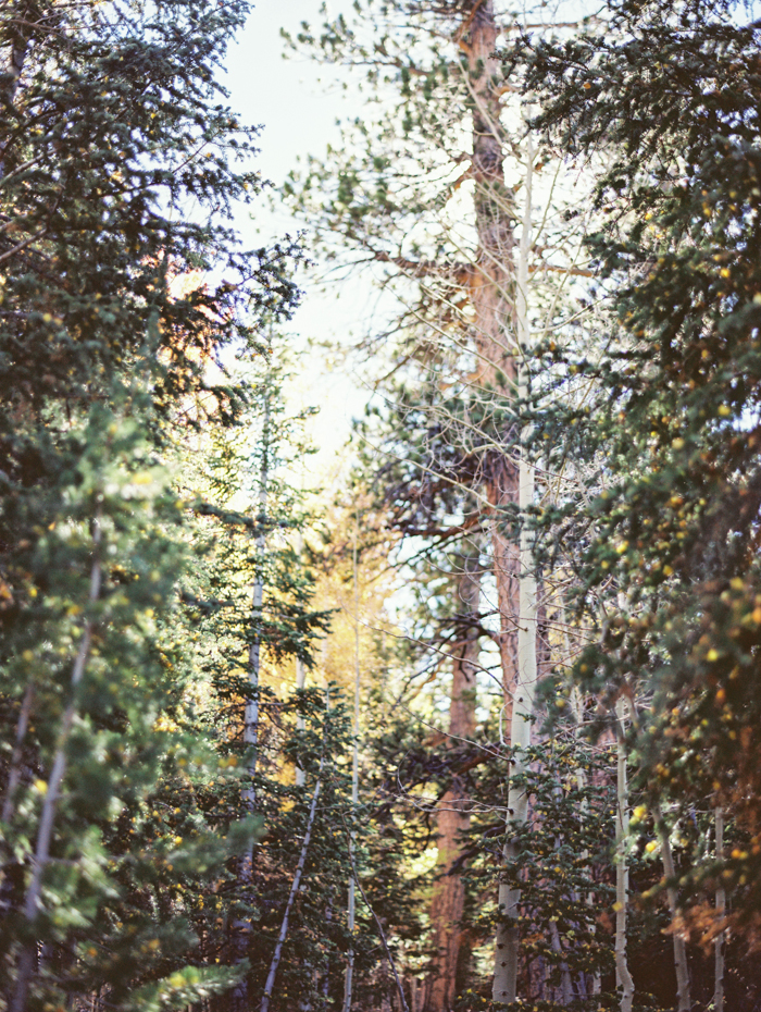autumn in mt charleston photography 19