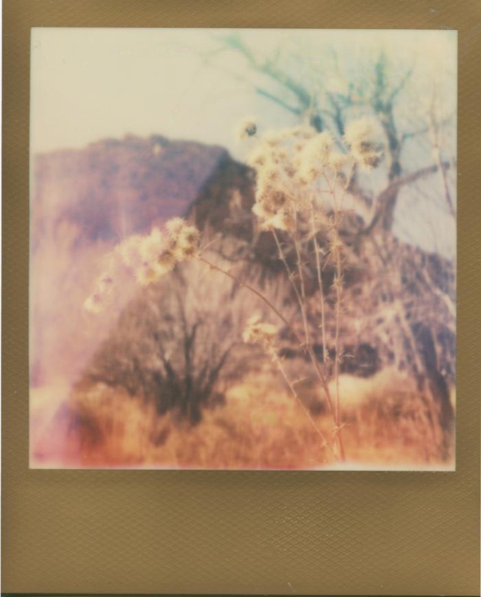nevada desert life polaroid