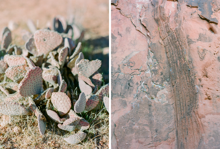 red rock state park desert life film 9