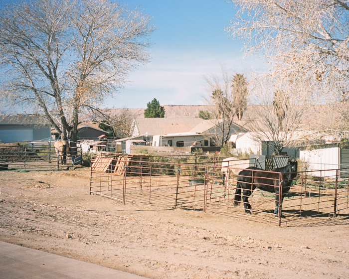 horses in bunkerville nevada