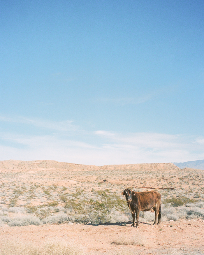 bunkerville nevada desert on film