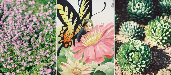 desert botanical garden phoenix arizona