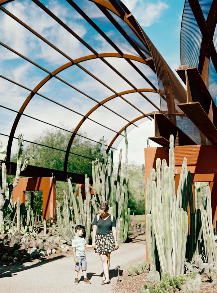 desert botanical garden phoenix arizona 7