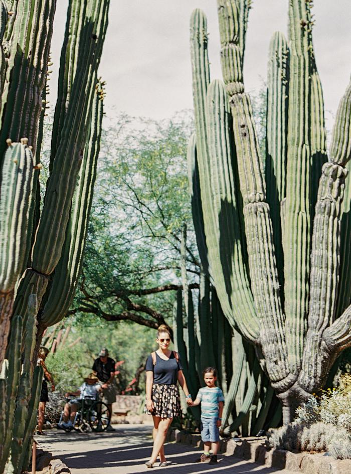 desert botanical garden phoenix arizona 14