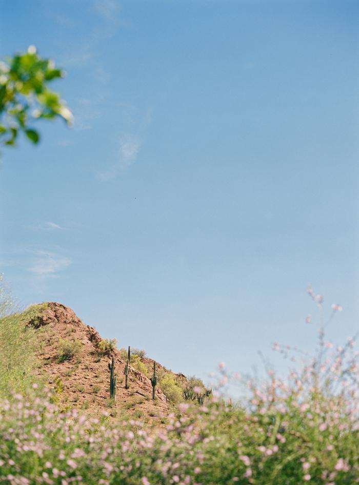 desert botanical garden phoenix arizona 18