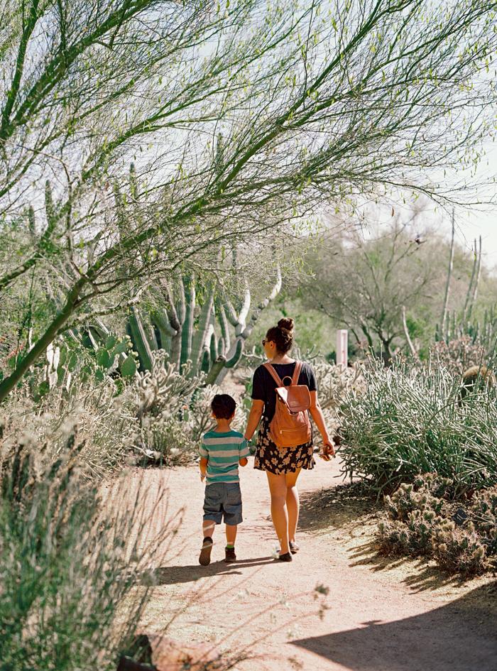 desert botanical garden phoenix arizona 19