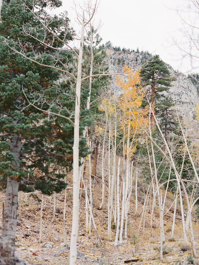 romantic vegas forest engagement photo 24