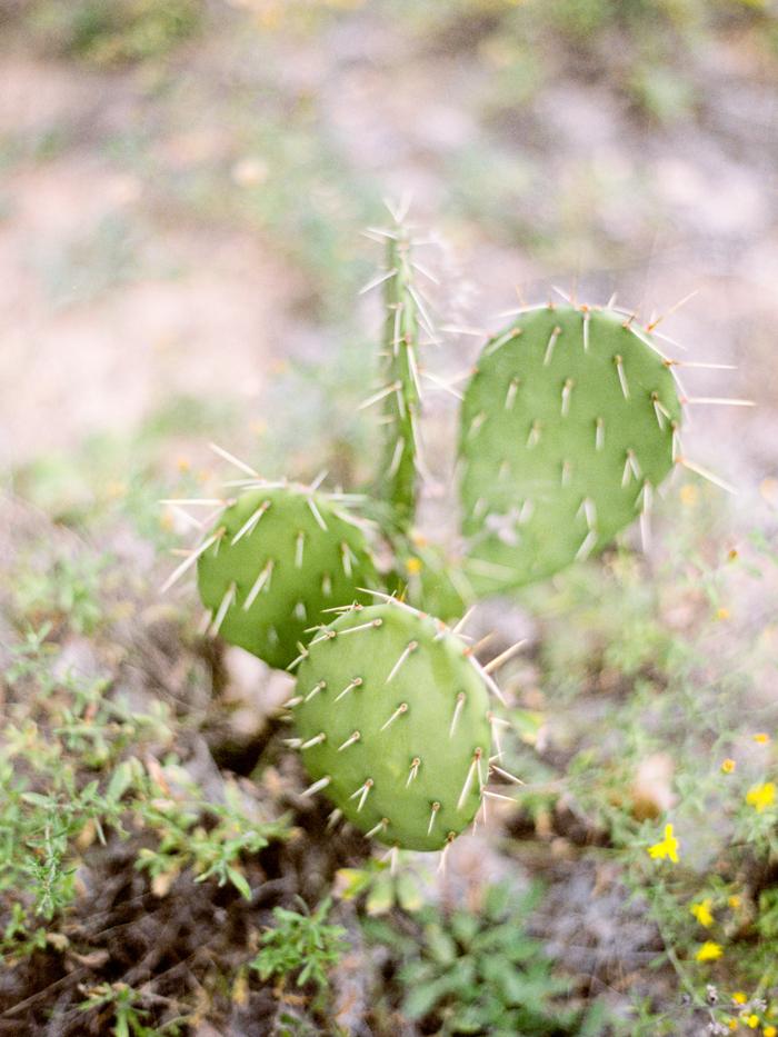 cactus zion national park photo