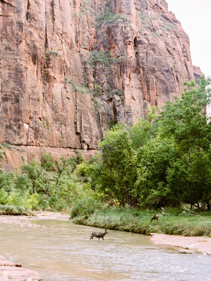 deer crossing zion river