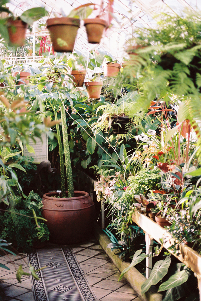conservatory of flowers SF on film