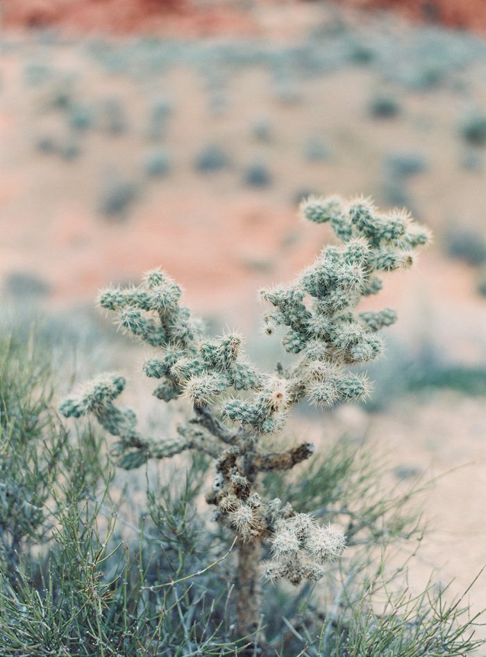 cactus in valley of fire