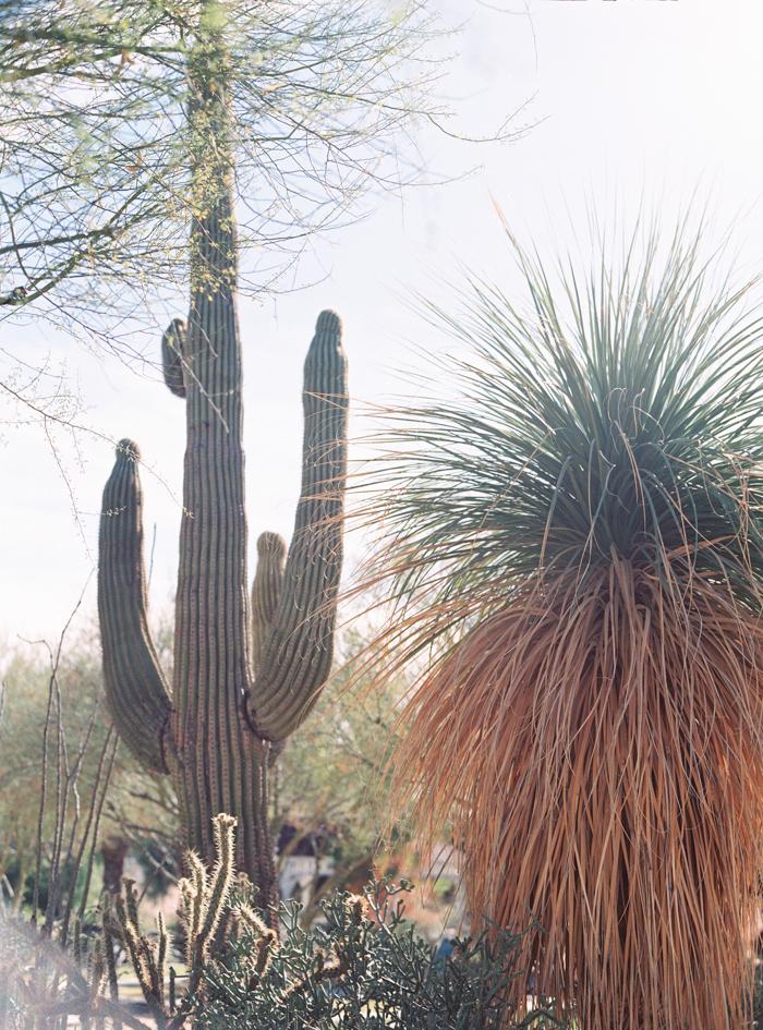 romantic desert arboretum vegas wedding photo 33