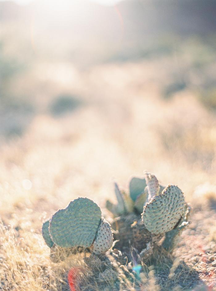 romantic desert arboretum vegas wedding photo 47