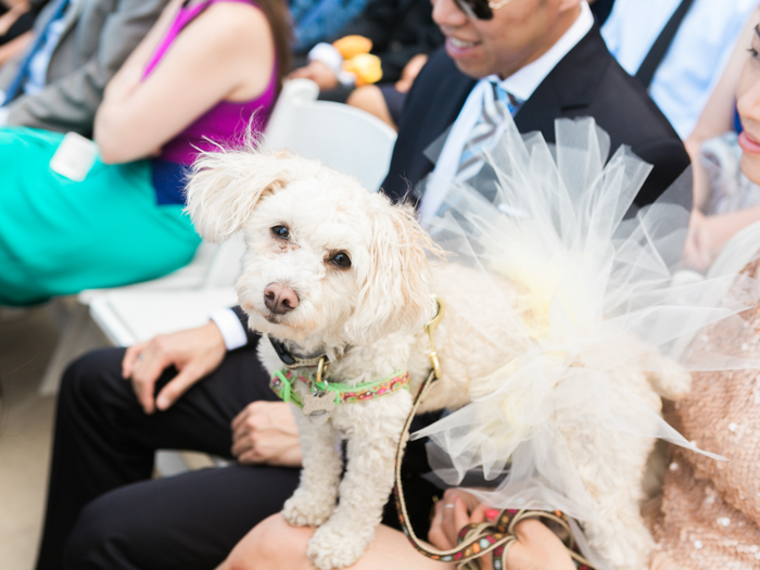 dog ring bearar in tutu | gaby j photography