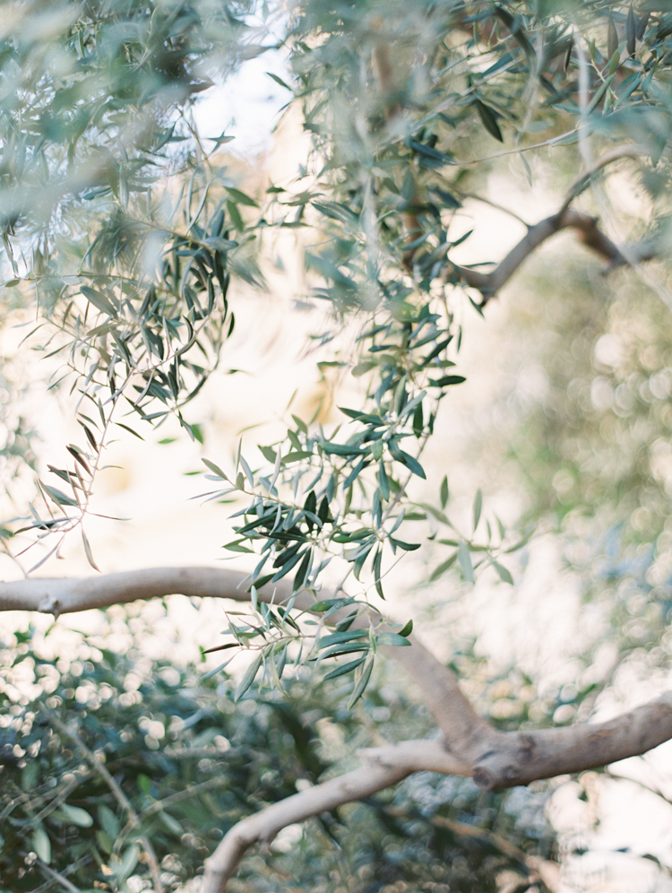 olive trees at green valley ranch