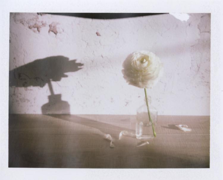white japanese ranunculus polaroid