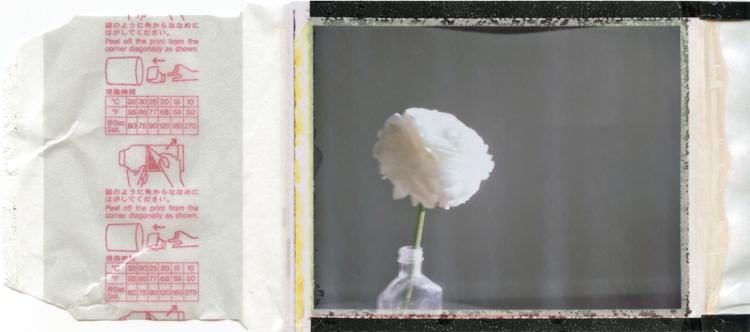white japanese ranunculus polaroid fp100c