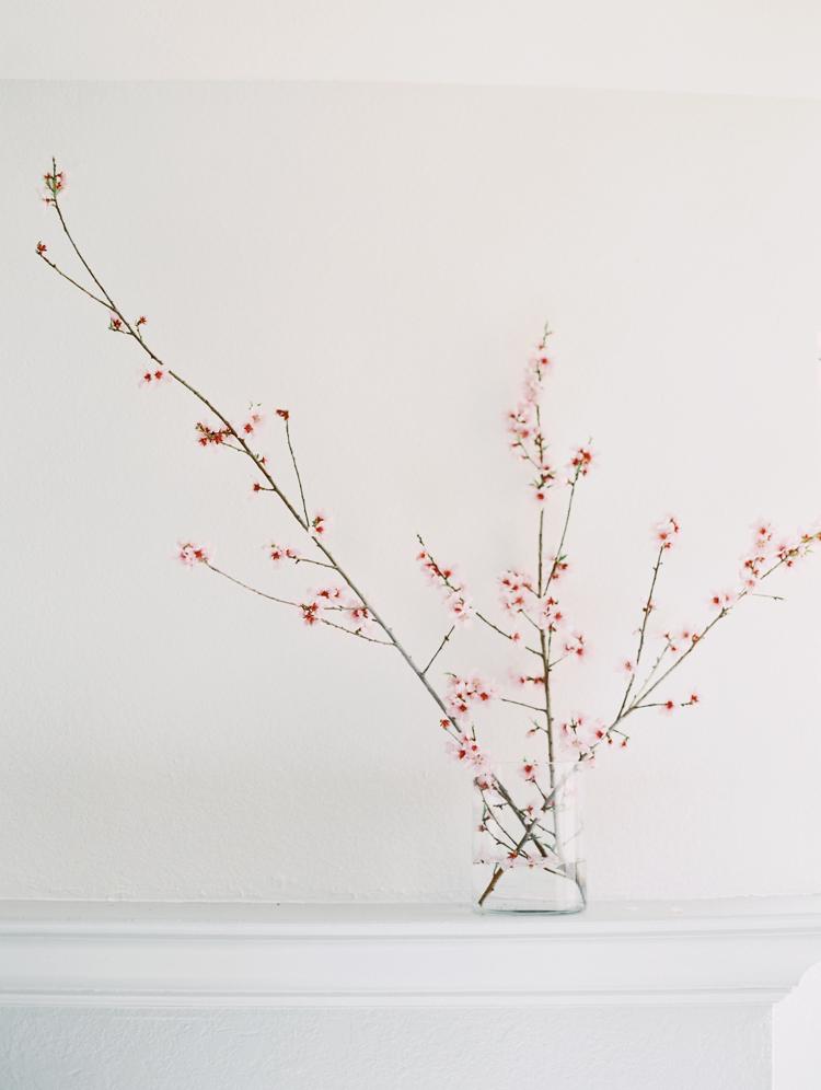 peach tree blossom still life