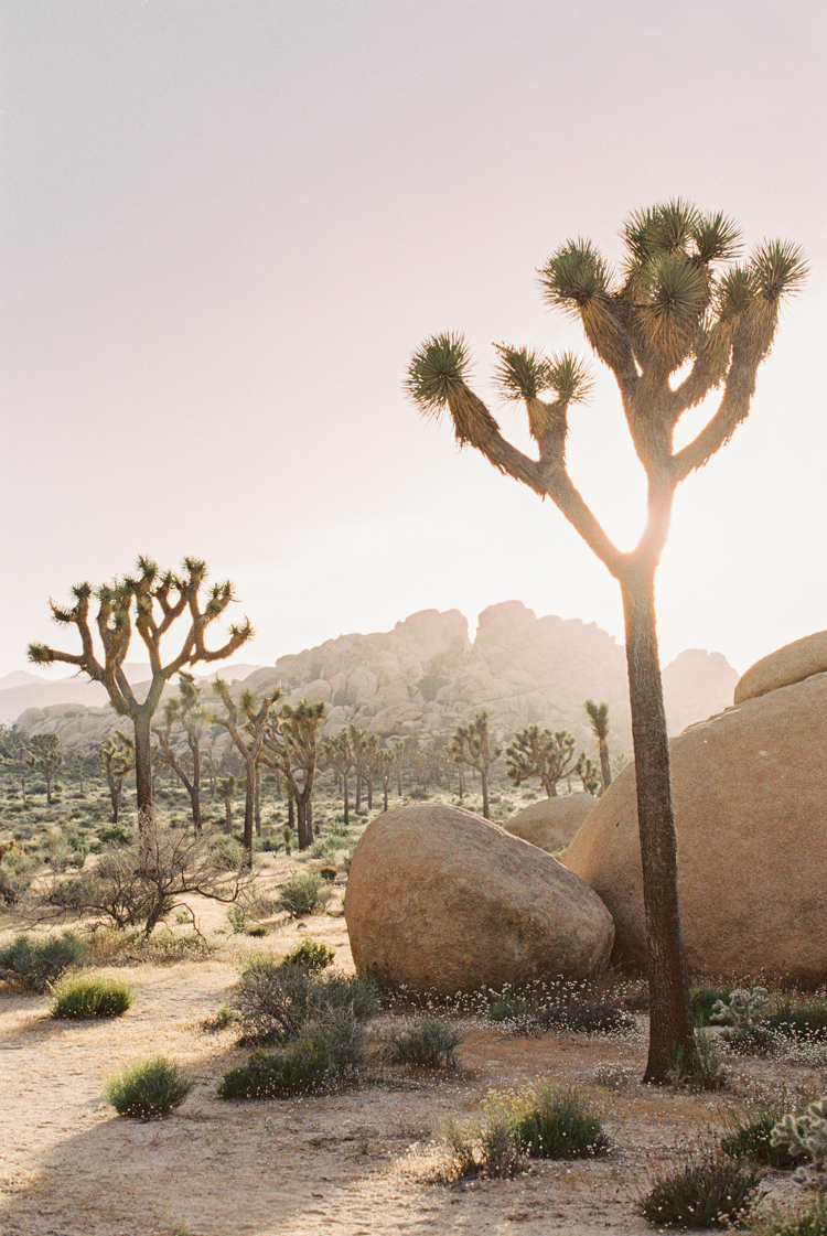 joshua tree national park during sunset
