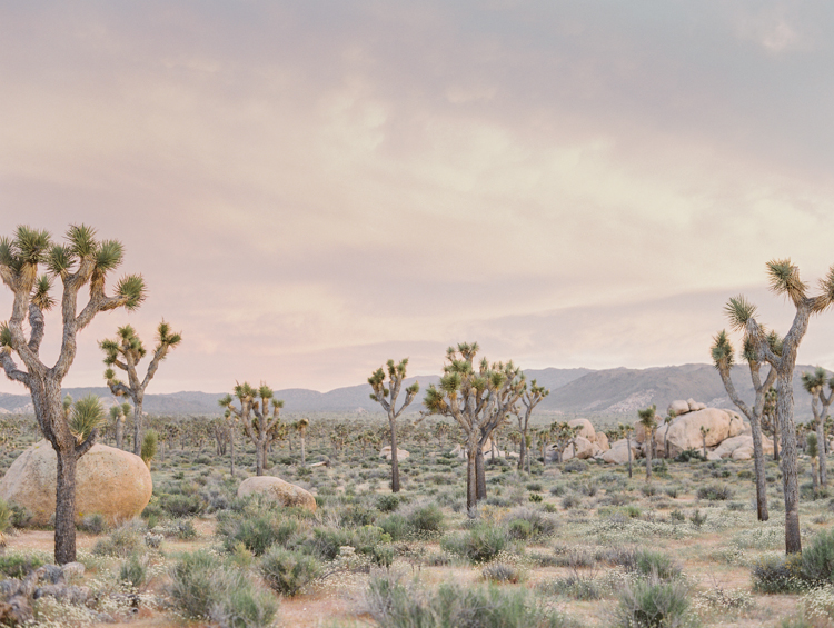 joshua tree national park during sunset photography
