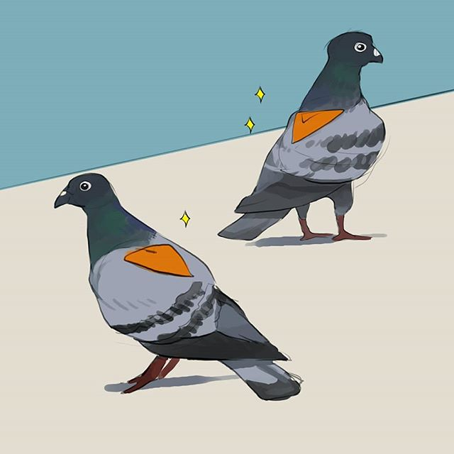 Saw the most amazing thing this weekend: a pigeon, unaware of the glorious, intact Dorito on its back. I can't stop thinking about it. How did the Dorito get there? . . . #illustration #artoftheday #artistsoninstagram #instaartist #instaart #illustrationoftheday #digitalart #pigeon #chicago