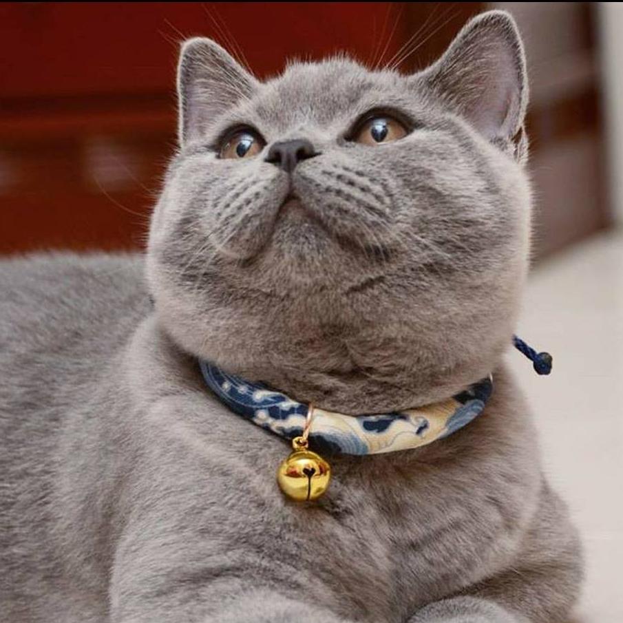 MeowLoland.jpg