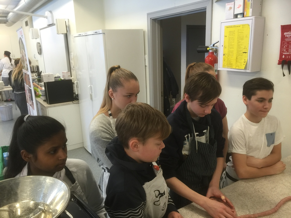 9. klassingene viste stor interesse for å lage lammepølse fra grunnen av.