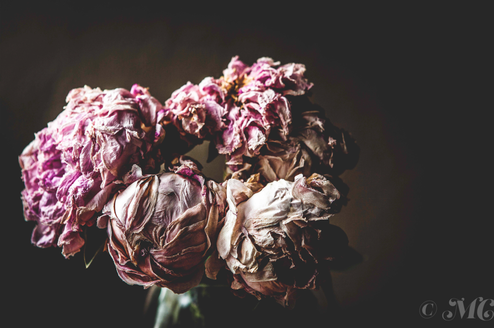 Wilted Peonies