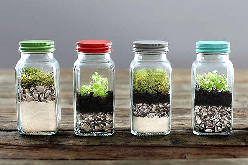 Het  terrarium in kleine potjes  met deksel in verschillende kleuren past binnen de botanischeinterieur trend.