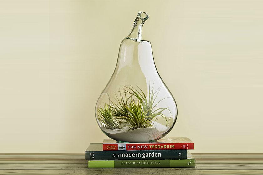 Terrarium in een peer-vormige glazen bak  - Een 'stylish'-verantwoorde oplossing binnen de botanische interieur trend