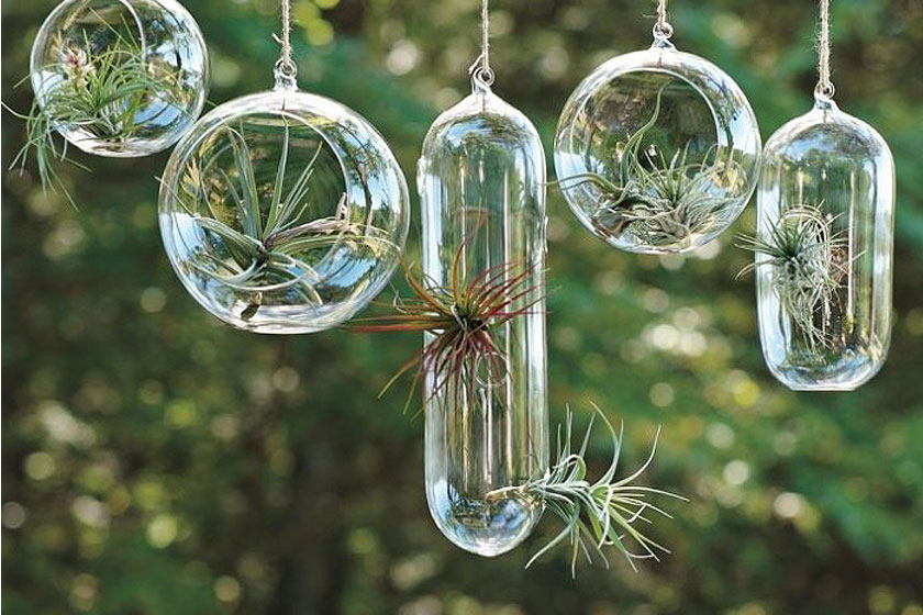 Hangend of staand. Het  terrarium is er in vele vormen en maten . Allemaal passend binnen de botanische interieur trend van nu.