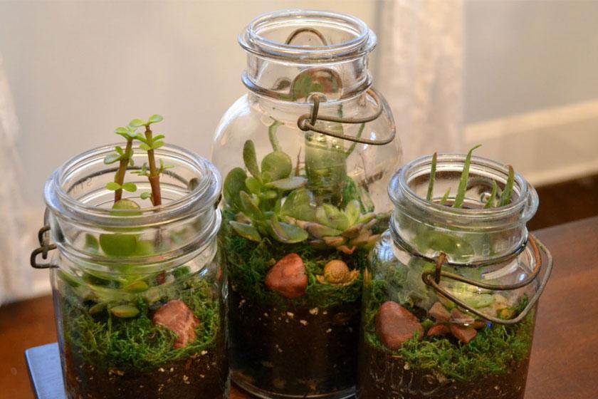 Een  terrarium is makkelijk zelf gemaakt . Met een paar oude potten en wat kleine plantjes heb je snel een terrarium passend binnen de botanische interieur trend van nu.