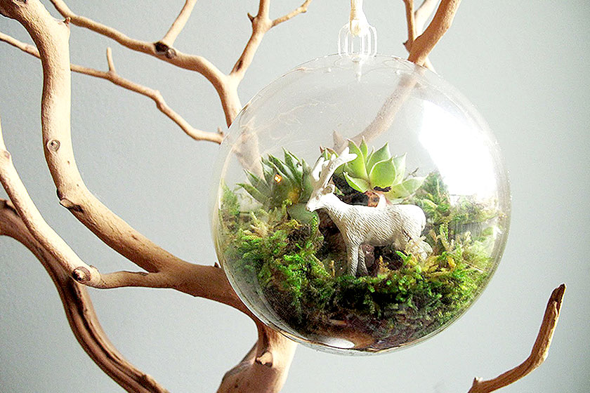 Voorbeeld van een  terrarium als een soortgrote kerstbal . Heel creatief en uniek. Ook zonder kerstboom is deze bal gevuld met planten goed zelf te maken.