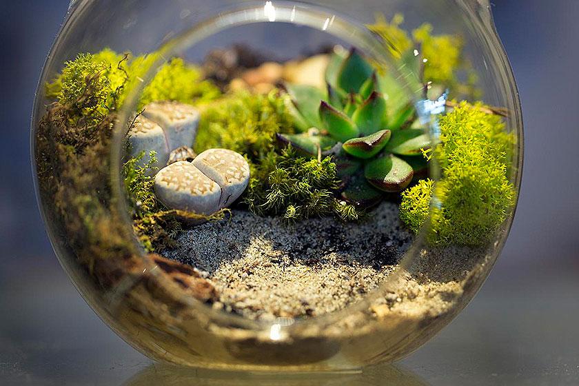 Een goed terrarium is een  kleine botanischewereld  op zichzelf. Gemakkelijk zelf te maken of kant-en-klaar te kopen.