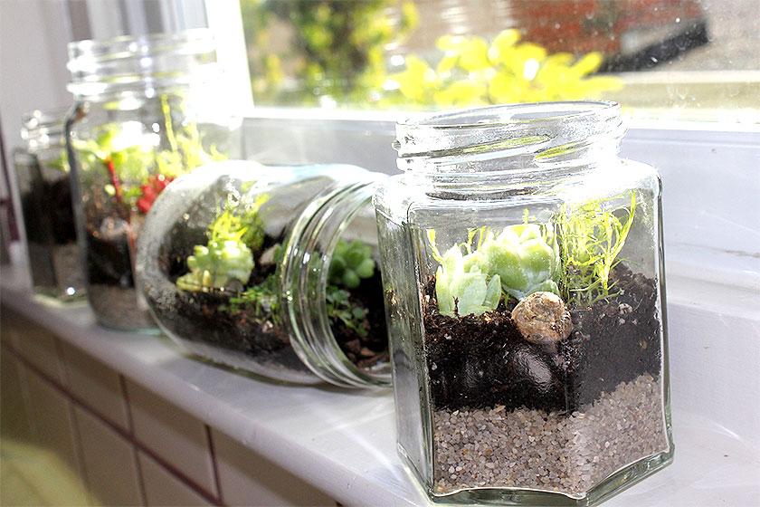 Oude voedselpotten  kunnen prima een tweede leven krijgen als terrarium. Liggend of staan in een vensterbank.