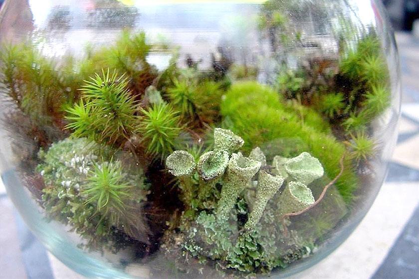 Er is een  groot assortiment kleine en grote planten  te koop. Inheems of exotisch. Voor elk terrarium is wel een passende oplossing te vinden.