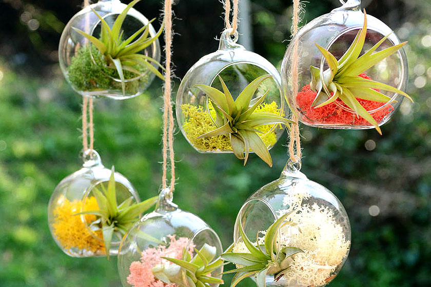 Sommige planten in een terrarium hebben  niet perse aarde  nodig om te overleven. Dit is een kleurrijk voorbeeld van hangende terrariums met gekleurde materialen.