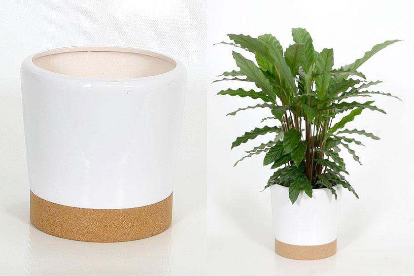 05-pot-planten-Vera-Wit-Cork-Kurk-10-voorbeelden-kurk-producten-op-Styling-blog-nl.jpg