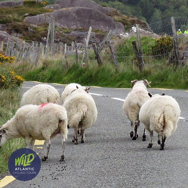 Steady on. Locals ahead! Learn more - www.wildatlanticcycling.com #biketouring #cyclingadventures #cahapass