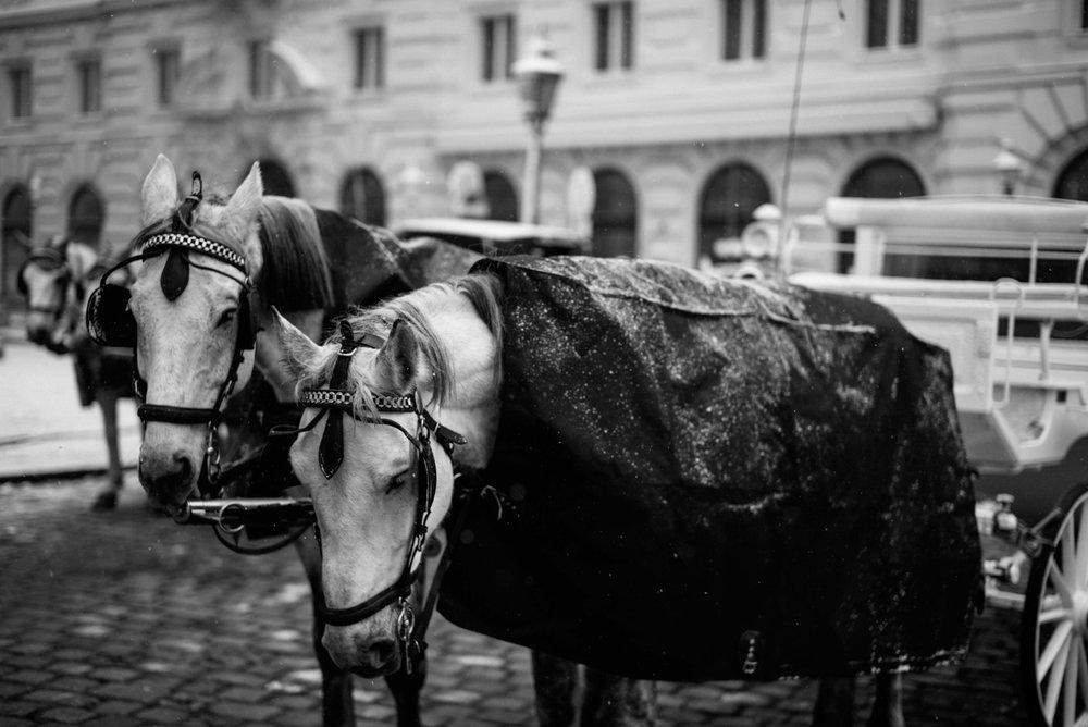 Leica-86.jpg